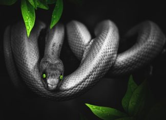 Ophidiophobia - Truth About Snake Phobia Main Image